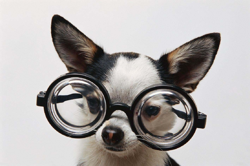 Original source: http://www.dancingdogblog.com/wp-content/uploads/2013/10/Dog-w-Glasses.jpg