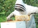 Original source: http://olebearzbees.com/wp-content/uploads/2016/01/beekeeping-1.jpg
