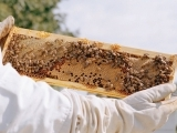 Backyard BeeKeeping - Litchfield