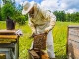 Bee Keeping,  Intermediate