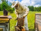 Bee Keeping,  Intermediate
