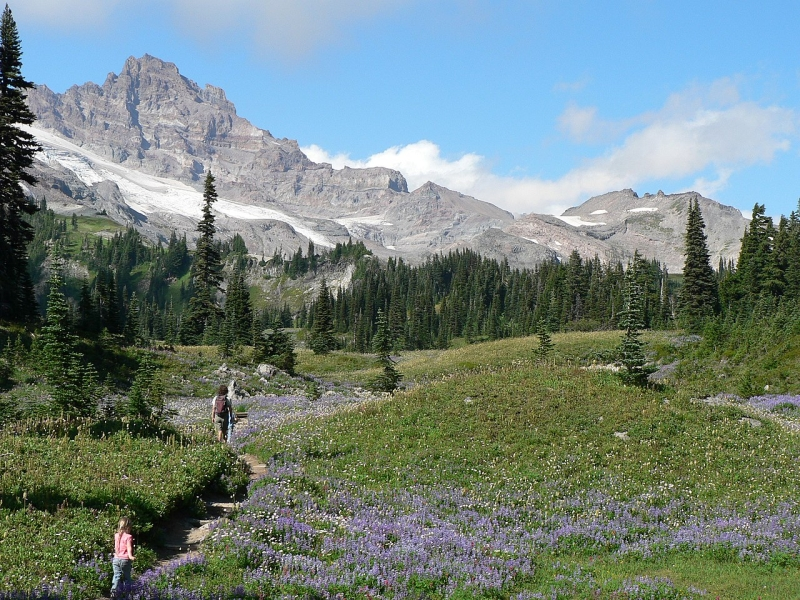 Original source: https://upload.wikimedia.org/wikipedia/commons/thumb/c/cf/Beth_and_Adrie_Redman_hiking_Lake_Trail_through_lupine_meadow._Little_Tahoma_in_background._%2845f7be4870e74090bf7560fbf8f72cd2%29.JPG/1280px-Beth_and_Adrie_Redman_hiking_Lake_Trail_through_lupine_