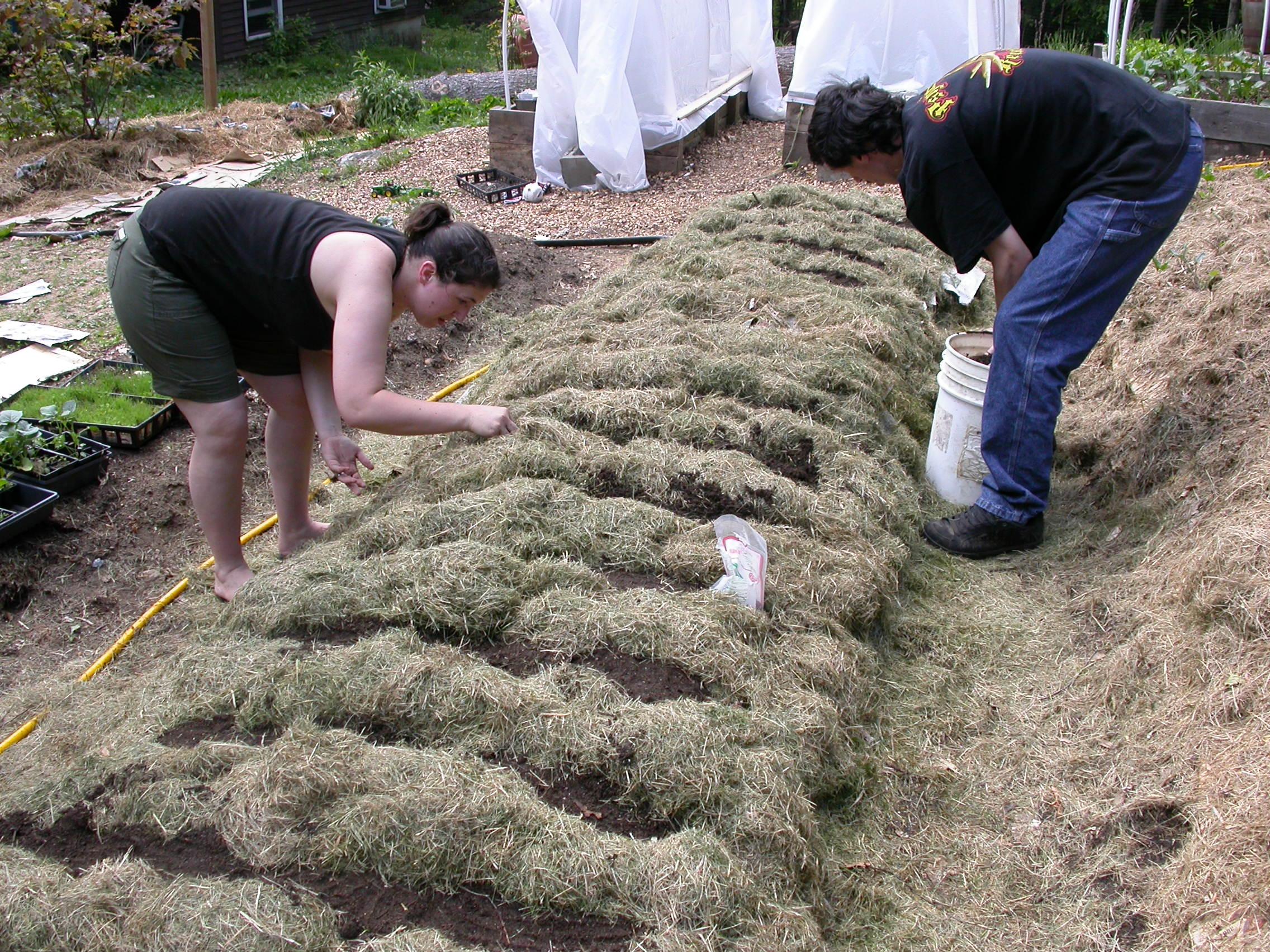 Lasagna Gardening in Raised Beds