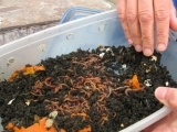 FALL Worm Composting for Beginners