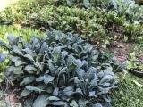 Growing Great Vegetables