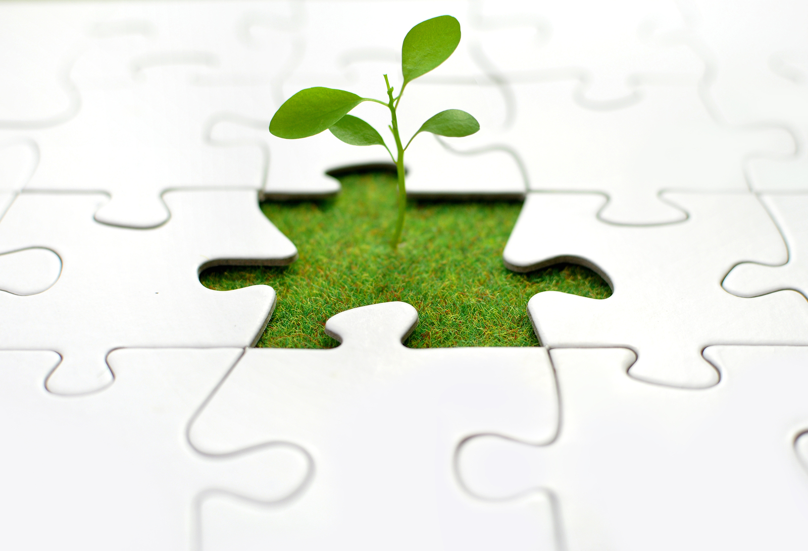 Learn How to Start a Plant Business