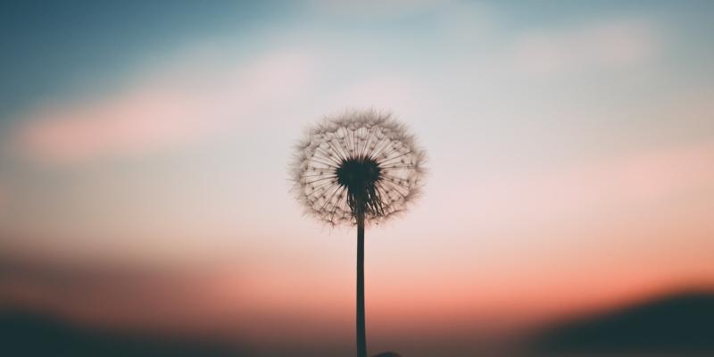 Original source: https://gemlowes.com/wp-content/uploads/2019/07/25-Lessons-Daily-Mindfulness-Meditation-2.jpg
