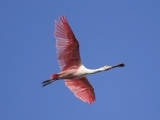 Birding Tour: Louisiana