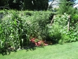Grow Your Own Organic Garden