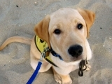 Dog & Puppy Obedience Training
