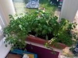 Original source: https://indoorplantsexpert.com/app/uploads/2016/07/windowsill-herbs.jpg