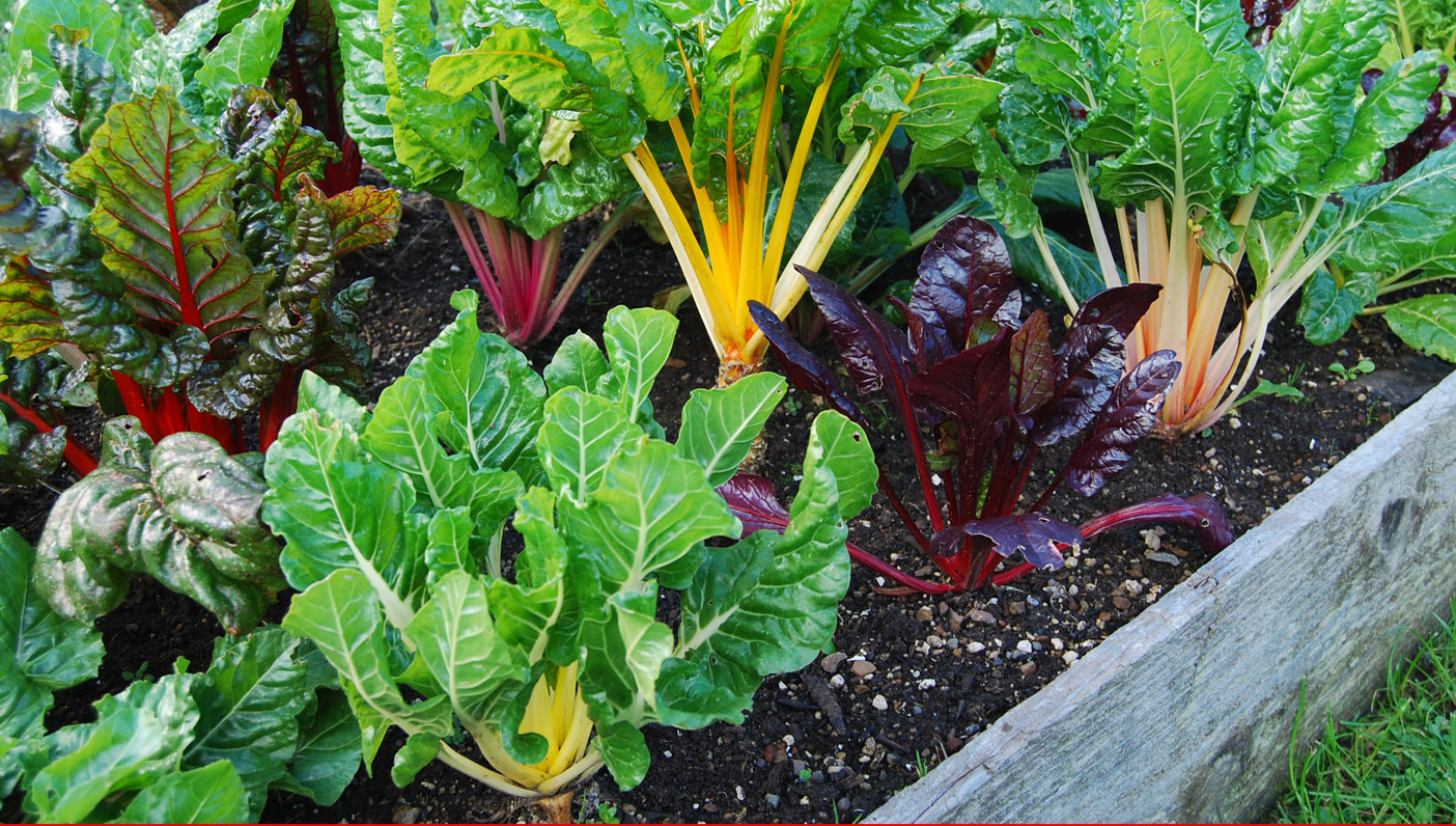 Grow Your Own Organic Garden (Waldoboro)