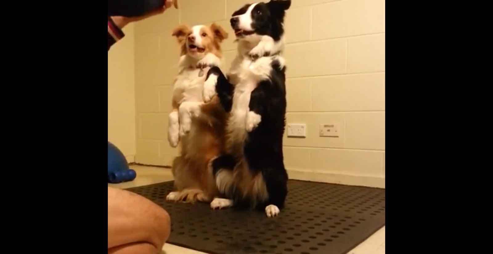 Trick Dog Novice to Intermediate