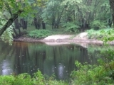 Forest Bathing- Ash