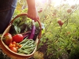 Grow Your Own Organic Garden - WS18