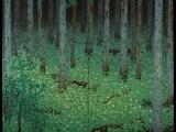 Forest Bathing: April