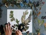E2110 - Pressed Plant Pictures