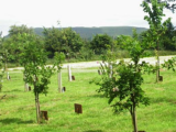 Intro to Conservation Burial Grounds