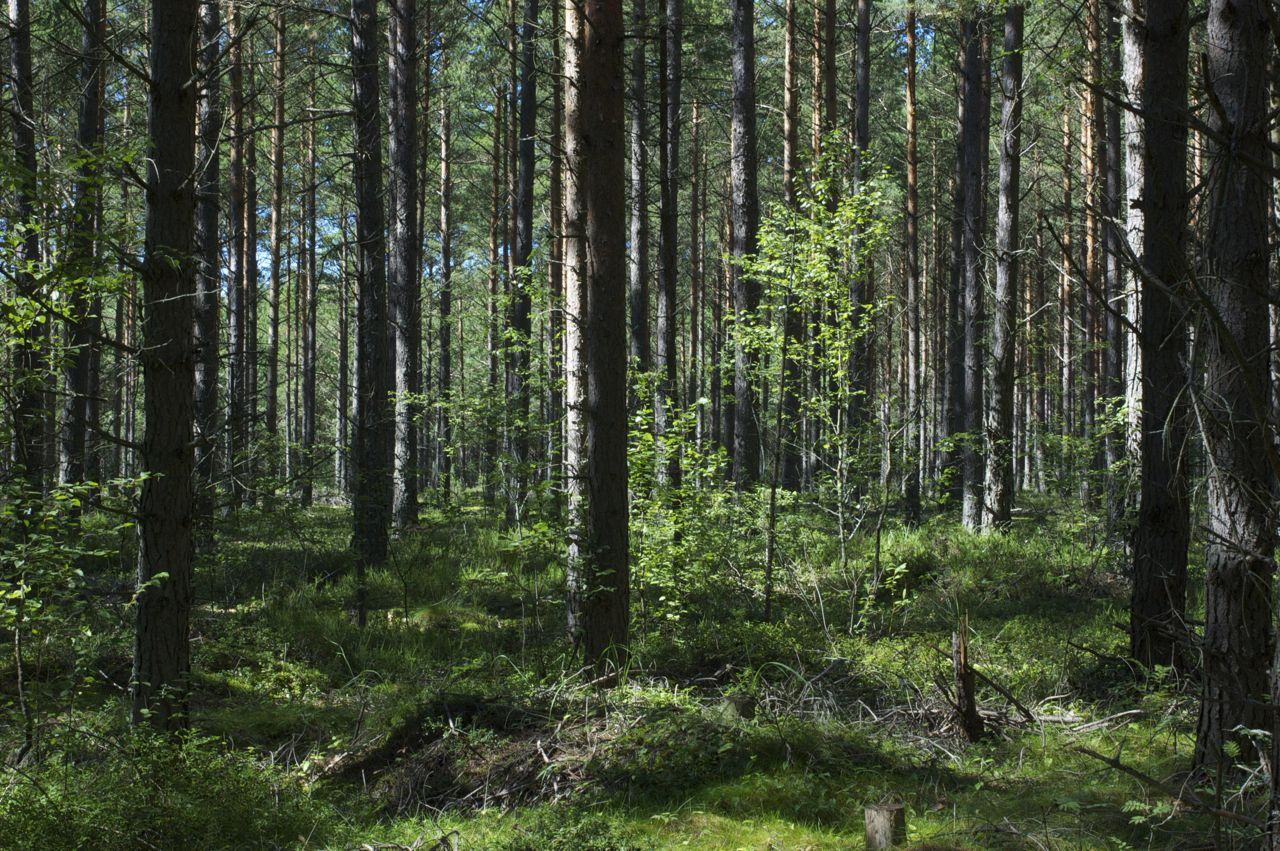 A Shortcourse for Woodland Owners