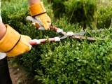 Basic Pruning Methods for Trees, Shrubs and Plants