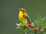 Birding by Sight, Song & Habitat I