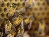 Children's Nature Series: Pollinator Power