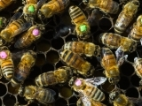 Installing your Bees/Mites/Feed