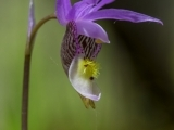 Photographing Wild Orchid