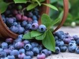 Berry Picking Basket