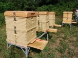 Langstroth Hive Demo