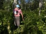 Gilsland Farm Wild Edibles Walk