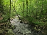 Forest Bathing - Nature and Forest Therapy Walk/Workshop
