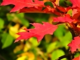 Autumn Watercolor: How to Paint Fall Leaves