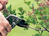 403S20 Spring Pruning and Garden Preparation
