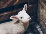 Start with the Arts—All About Spring: Barnyard Fun
