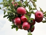 A Seminar on Fruit Trees (Online)