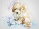 The Pet Portrait Project