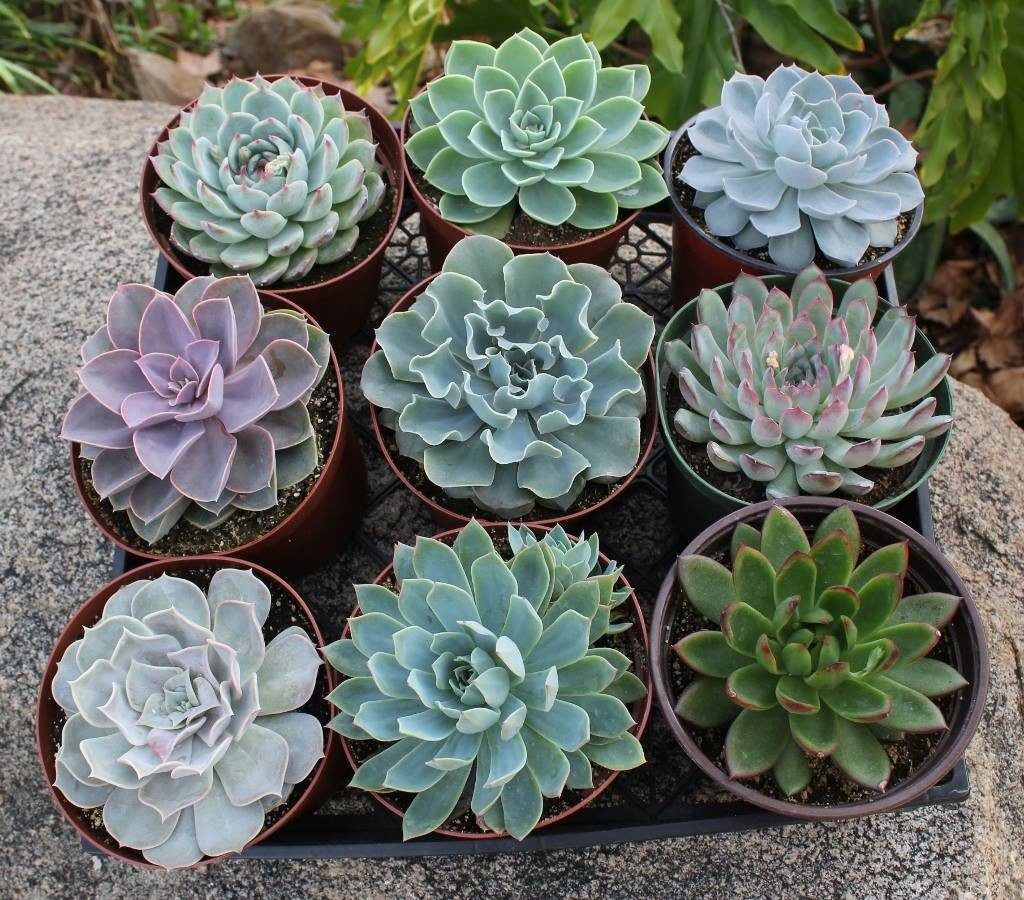 Everything Succulent