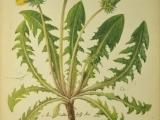 Botanical Drawing - Weeds