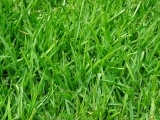 Healthy Lawn Care Made Easy