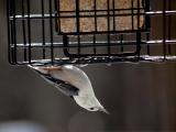 Bird Feeding Celebration