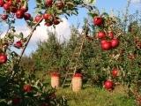 A Seminar on Fruit Trees - Litchfield