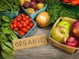 Edible Holistic Wellness 101 Fall 2019