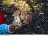 Mushrooming, Session II