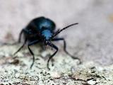 Insect Bio Blitz!