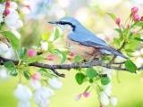 Lily & Vine Floral Design - Spring Garden (Online)