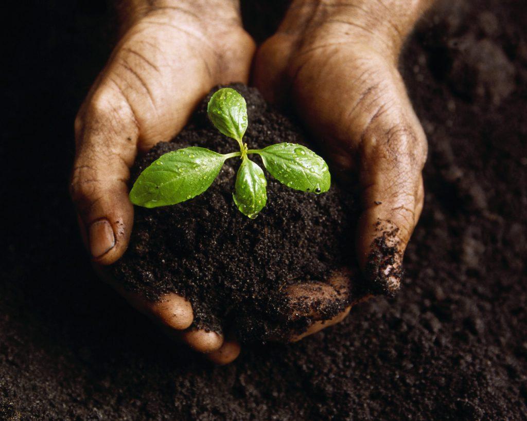 GAR 04 - Workshop: Beginner's Organic Living Soil Building