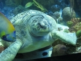 Day Trip to Boston and the New England Aquarium W18