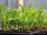 What, When, Where, and Why to Starting Vegetable Seeds