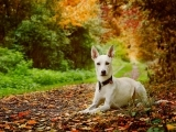 Dog Training: Canine Good Citizen